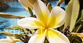 8 Martie - La Multi Ani pentru totate femeile - O floare pentru fiecare - poze 8 Martie