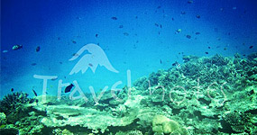 Egipt, Marea Rosie, Sharm el Sheikh - paradisul scufundarilor - scuba diving - snorkeling