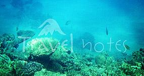 Red Sea scuba diving - Scufundari in Marea Rosie, Egipt - Poze Marea Rosie - Poze recif corali Egipt